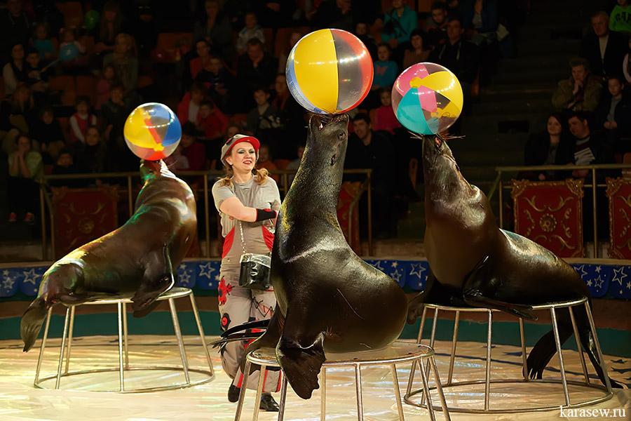 мужчины картинки артисты цирка животные того, можно