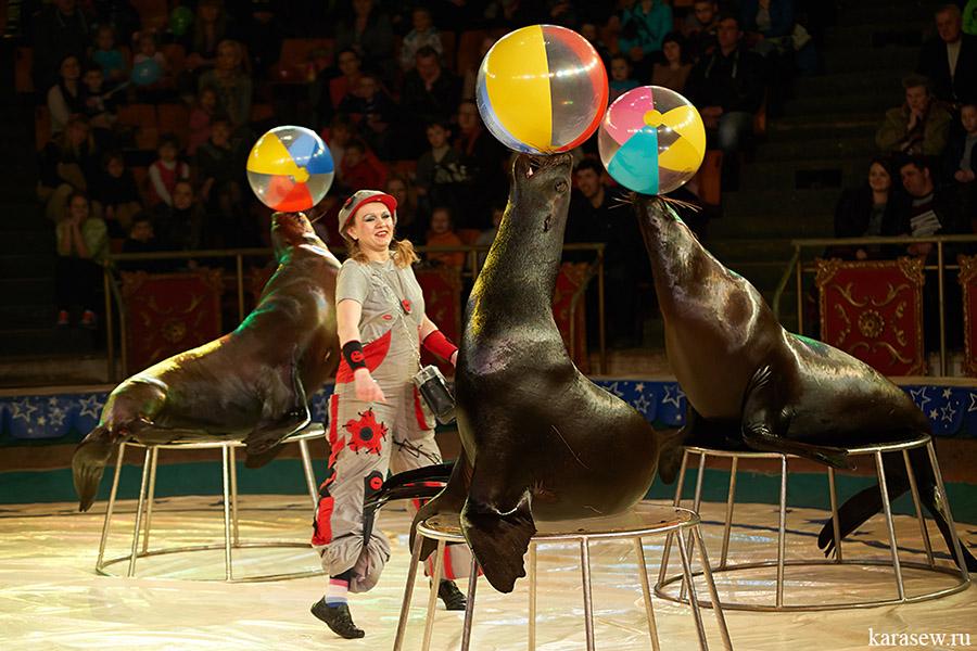 Московский цирк открытки, днем