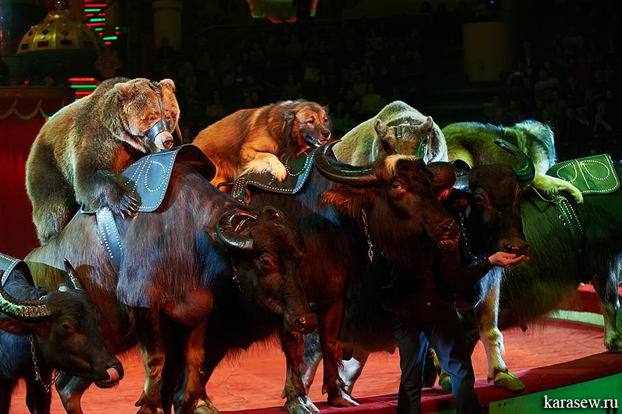 цирк на красносельской фото раз жизни